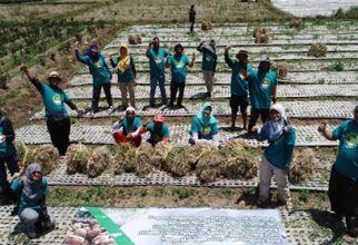 Organic Fertilizer laden with local discernment, New Hope for Sembalun Agriculture
